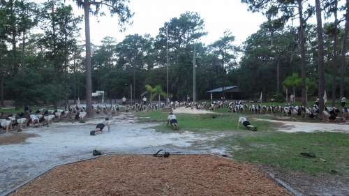 Cadets participated in physical training (PT) every morning.